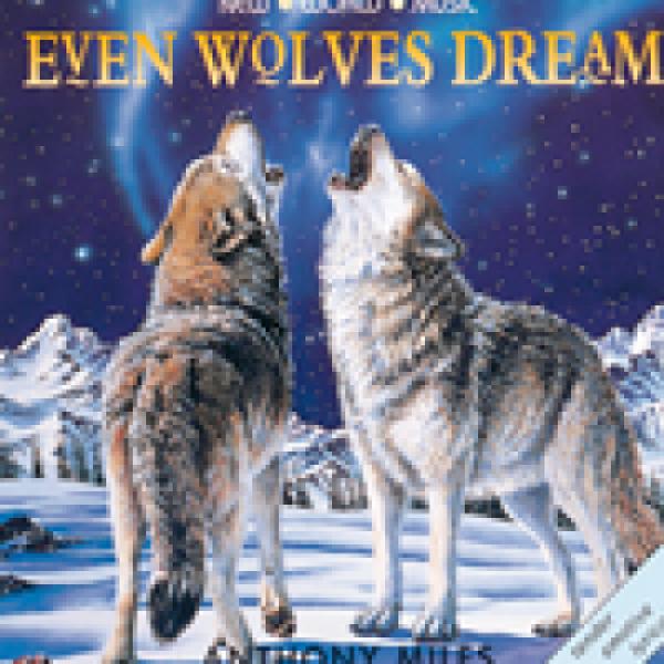 Even Wolves Dream CD
