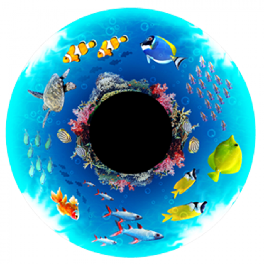 Tropical Reef Effects Wheel